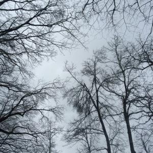 Winter Walk_12